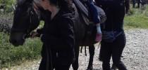 Druženje s konji